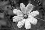 Blüte2