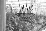 Hydroponik: Gemüseanbau auf Mineralwolle, gedüngt mit dem, was die Fische ausscheiden.
