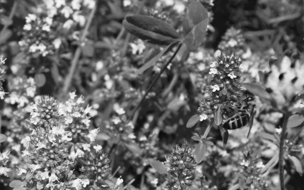 taz-Bienen